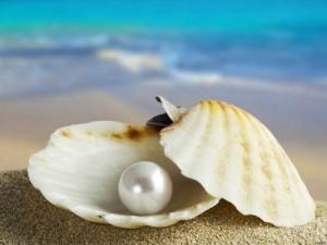 conchiglia-perla