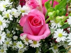 fiore-300x225